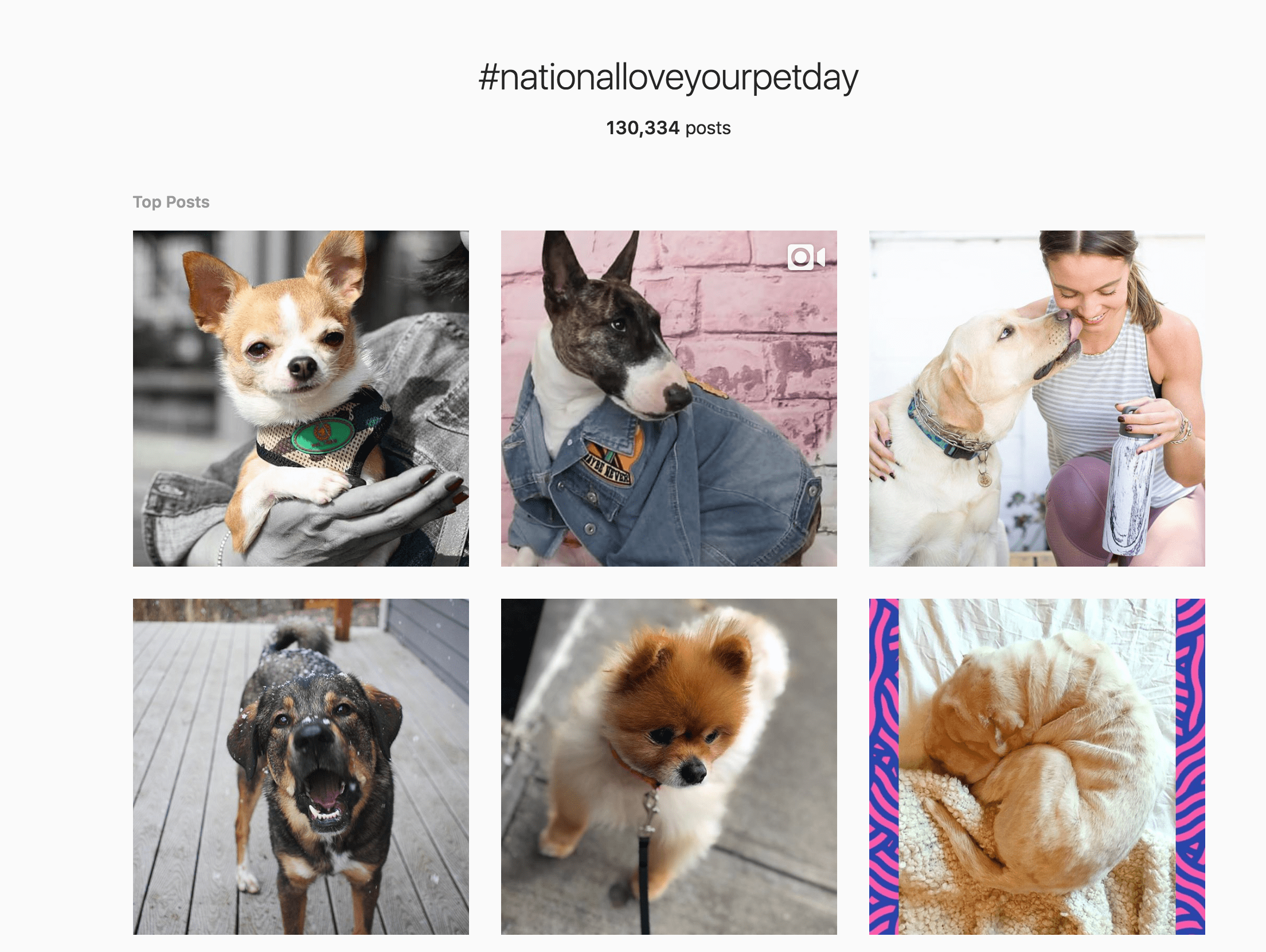 instagram shadowban #nationalloveyourpetday top posts hummingbird creative group